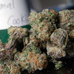 animal-cookies-marijuana-strain-1
