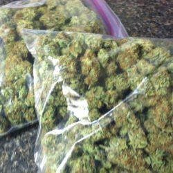 dunnellon-marijuana-bust-3-032114